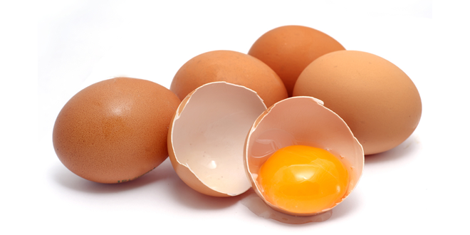 What is Egg Protein
